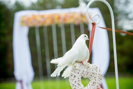 выпуск голубей на свадьбу