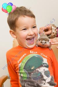 шоу ежиков на детский праздник