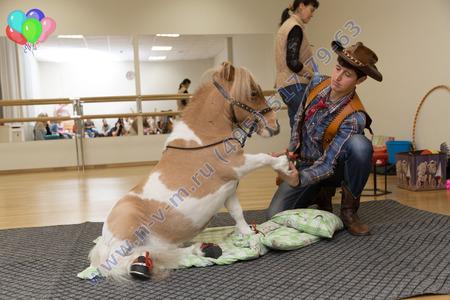 шоу с лошадкой