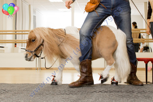 шоу с лошадкой на детский праздник