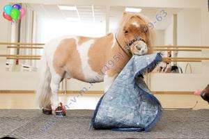 шоу лошадки