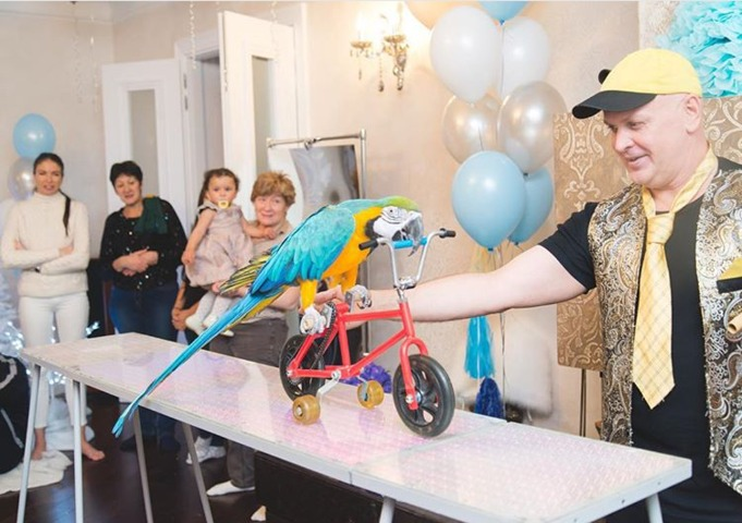 шоу попугаев на детский праздник